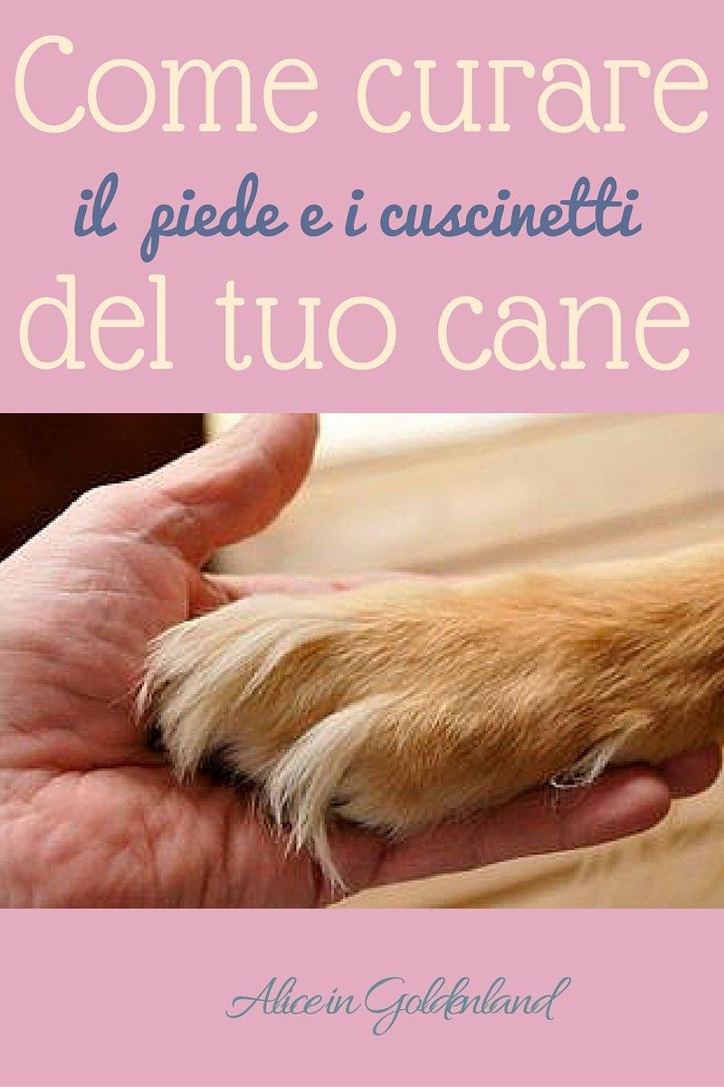 come curare piede cuscinetti del cane
