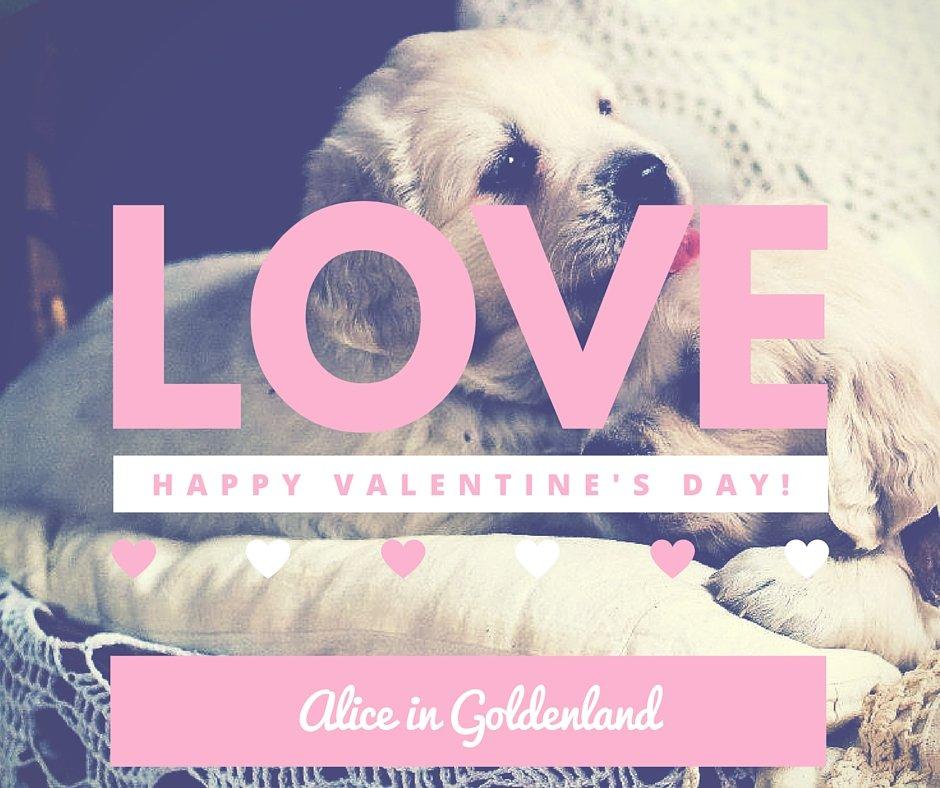 love golden retriever