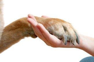 cura del piedino del cane