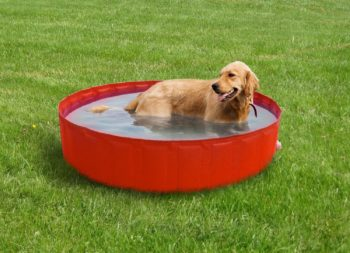 piscina-media-cani